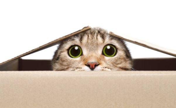 photo chat-carton-sidération
